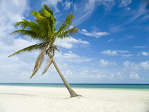 palm trees in Mexico, Riviera Maya Stock Image