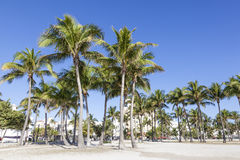 Palm Trees in Miami Beach Stock Photography
