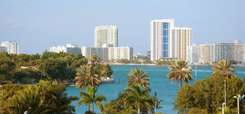 Palm trees and the Miami skyline. Daytime Royalty Free Stock Images
