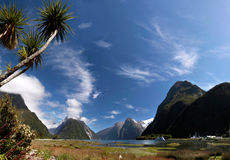 Palm trees in the Milford Sound Stock Photos