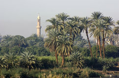 Palm trees and minaret Stock Image