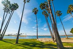 Palm trees in Mission Bay. California Royalty Free Stock Photos