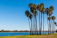 Palm Trees on Mission Bay in San Diego Stock Photography