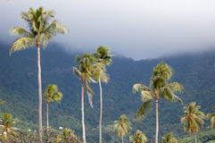 Palm trees and mist Moorea Royalty Free Stock Photos