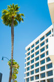 Palm trees and modern architecture Royalty Free Stock Photos