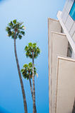 Palm trees and modern architecture Stock Images