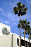 Palm Trees & Modern Building Royalty Free Stock Photography