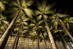 Palm Trees with modern building background Stock Image