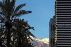 Palm trees and modern buildings on the side with blue sky in the royalty free stock photo