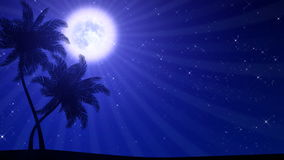 Palm Trees with Moon (Animated HD Background). HD animation of stylized palm tree silhouettes stock video