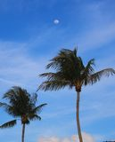 Palm Trees with the Moon. Palm Trees with a Blue Sky and the Moon Royalty Free Stock Photos