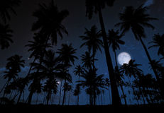 Palm trees and moon at night. Palm tree forest during at night with big full moon and starry sky full of stars Royalty Free Stock Photo