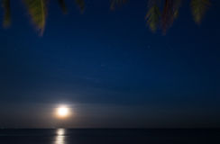 Palm Trees and Moon at Night time Royalty Free Stock Images