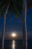 Palm Trees and Moon at Night time Stock Photos
