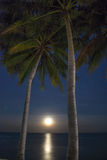 Palm Trees and Moon at Night time Stock Photography