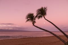 Palm Trees and Moon at Sunrise. A full moon and palm trees on a Maui beach at sunrise Royalty Free Stock Photos