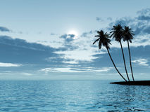 Palm trees in a moonlight stock photography