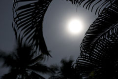 Palm trees in moonlight Stock Photos