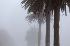 Palm trees in the morning mist Royalty Free Stock Photography
