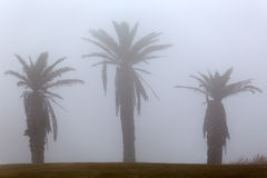 Palm trees in the morning mist Stock Images
