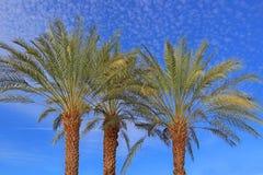 Palm Trees  - Mottled Sky Royalty Free Stock Photo