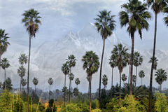 Palm trees and mountain Stock Photos