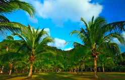 Palm trees and mountains Stock Photos