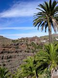 Palm Trees in the Mountains. La Gomera, Canary Islands, West Africa Stock Photography