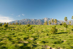 Palm Trees and Mountains Stock Photography