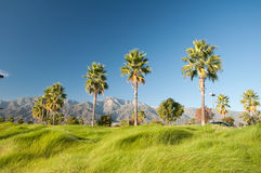 Palm Trees and Mountains. Mountains nature and palm trees under a Bright blue sky daylight Stock Images