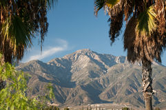 Palm Trees and Mountains. Mountains nature and palm trees under a Bright blue sky daylight Stock Image