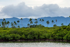Palm trees and mountains. Palm trees in the Fiji Islands stock photography