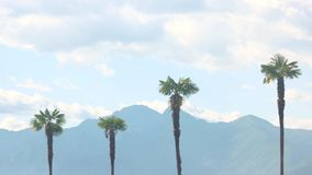 Palm trees, mountains and sky. Palm trees mountains and sky. Nature and clouds stock footage
