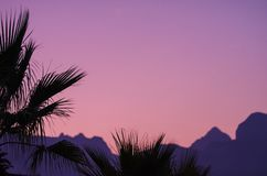 Palm trees with mountains at sunset with fog casts a pink color stock photography