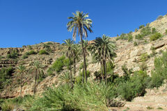 Palm trees in mountains Royalty Free Stock Photo