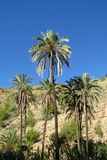 Palm trees in mountains royalty free stock image