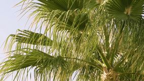 Palm trees are moving in the wind stock footage