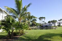 Palm trees in Naples, Florida stock image