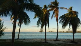 Palm trees. Nassau beach palm trees royalty free stock image