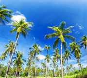 Palm trees natural background Stock Image