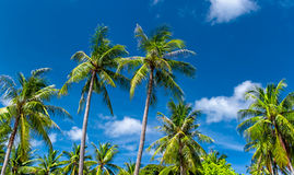 Palm trees natural background Stock Images