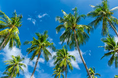 Palm trees natural background Stock Photo