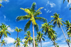 Palm trees natural background Royalty Free Stock Photography