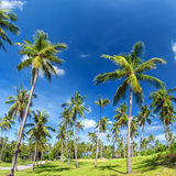 Palm trees natural background. Blue sky and tropical plants Royalty Free Stock Photos