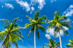 Palm trees natural background. Blue sky and tropical plants Royalty Free Stock Image