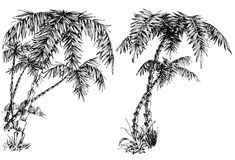 Palm trees. Nature design elements Stock Images