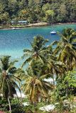 Palm trees near bay. Palm trees lining Marigot Bay in St. Lucia, Caribbean Royalty Free Stock Images