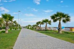 Palm trees near sea. Royalty Free Stock Photography