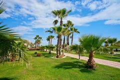 Palm trees near sea. Stock Photography