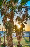 Palm trees near the sea. On grass with sun spot daylight in Israel country Stock Images